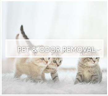 Pet & Odor Remoal